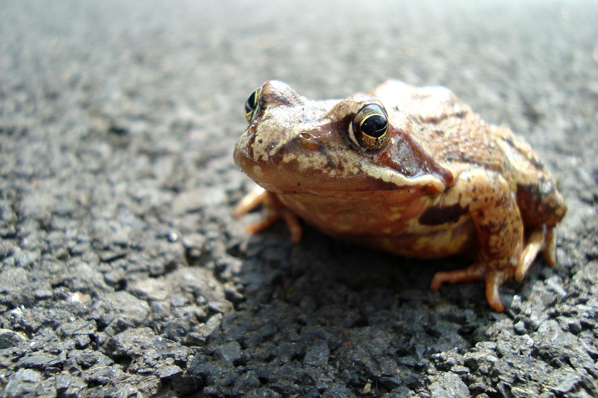 frog-1-1248517-1920x1280